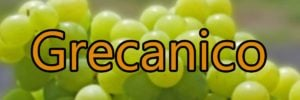 Wine with Grecanico grapes