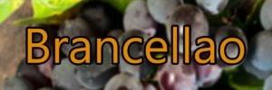 Wine with Brancellao grapes