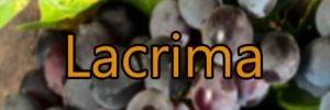 Lacrima di Morro wine with Lacrima grapes