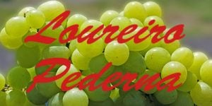 Loureiro Pederna grapes