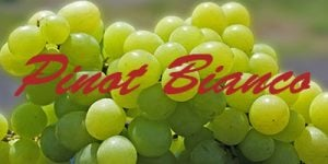 Pinot Blanco grapes