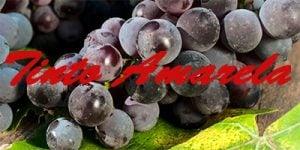 Tinto Amarela grapes