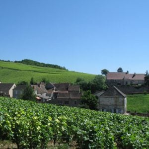 Wines from Burgundy