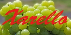 Xarello grapes