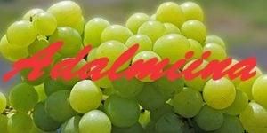 Adalmiina grapes