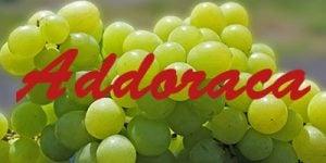 Addoraca grapes