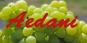 Aedani grapes