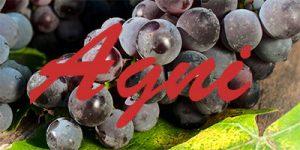Agni grapes