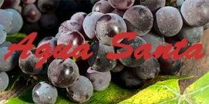 Agua Santa grapes