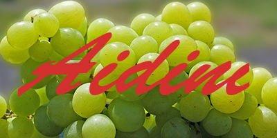 Aidini grapes