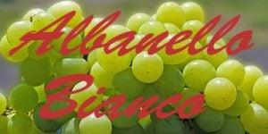 Albanello Bianco grapes