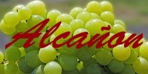 Alcañon grapes