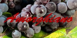 Amorghiano grapes