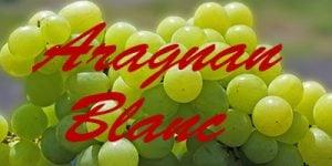 Aragnan Blanc grapes