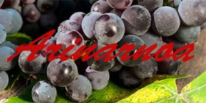 Arinarnoa grapes