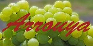 Arrouya grapes