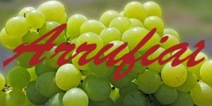 Arrufiat grapes