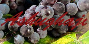 Ashughaji grapes