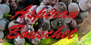 Aspiran Bouschet grapes