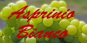 Asprinio Bianco grapes