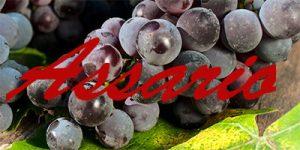 Assario grapes