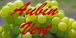 Aubin Vert grapes
