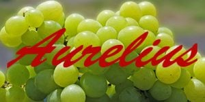 Aurelius grapes