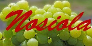 Nosiola grapes