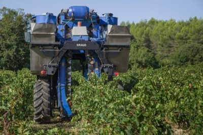 Winemaking - harvesting