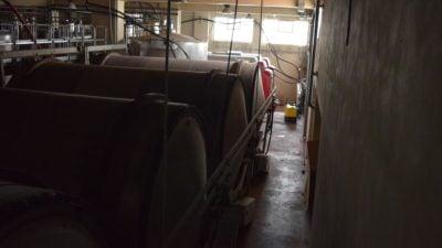 Winemaking - fermentation