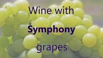 Wine With Symphony Grapes