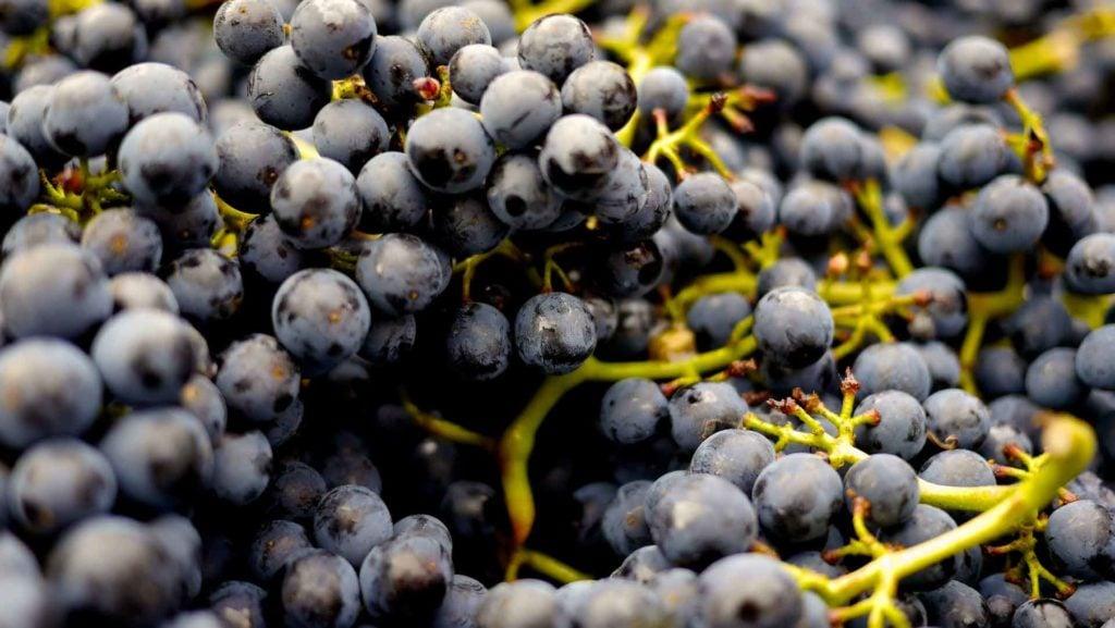 Low sulfite wines