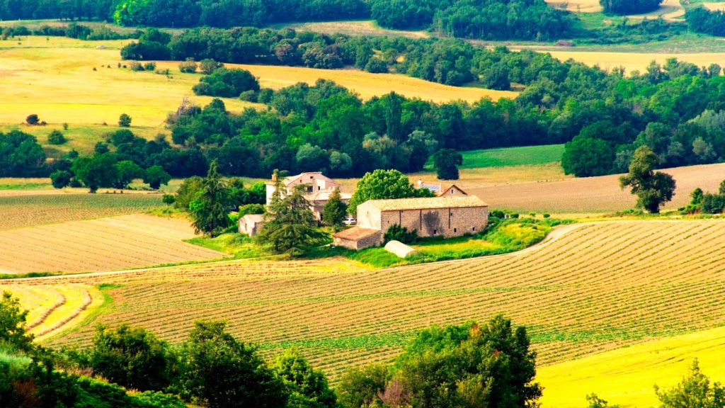 A Sommelier's Introduction to Provence