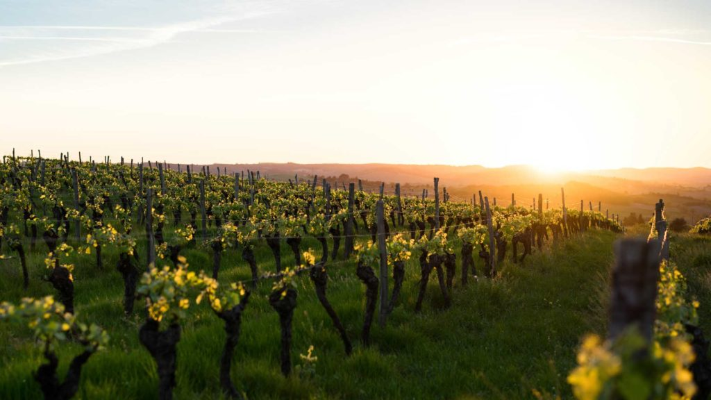 Wine tour France