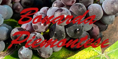 Bonarda Piemontese