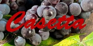 Wine with Casetta grapes