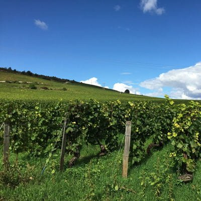 Wines from Chablis - a wine region in Burgundy, France