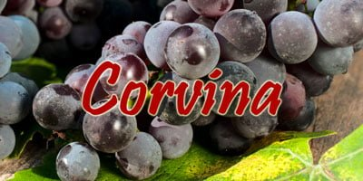 Wines with Corvina grapes