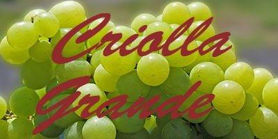 Criolla Grande