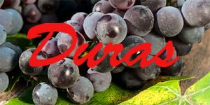 Wine with Duras grapes