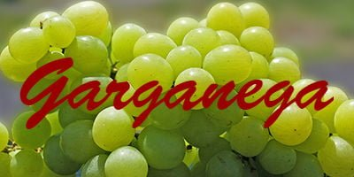 Wines with Garganega grapes
