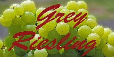 Grey Riesling