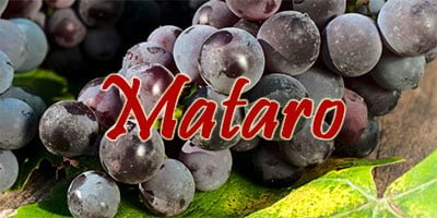 Mataro grapes