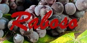 Raboso grapes