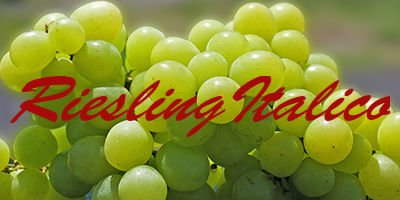 Riesling Italico
