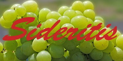 Sideritis grapes