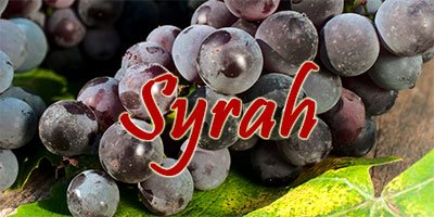 Wines with Syrah grapes