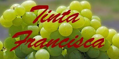 Tinta Francisca
