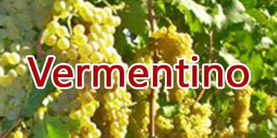 Wines with Vermentino grapes
