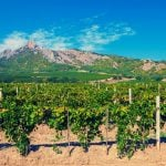 Wine Tours and Vineyard Tours